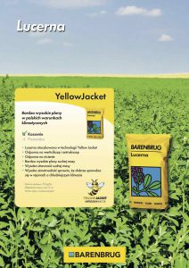 lucerna yellow jacket