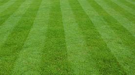 Trawniki przydomowe, murawy sportowe
