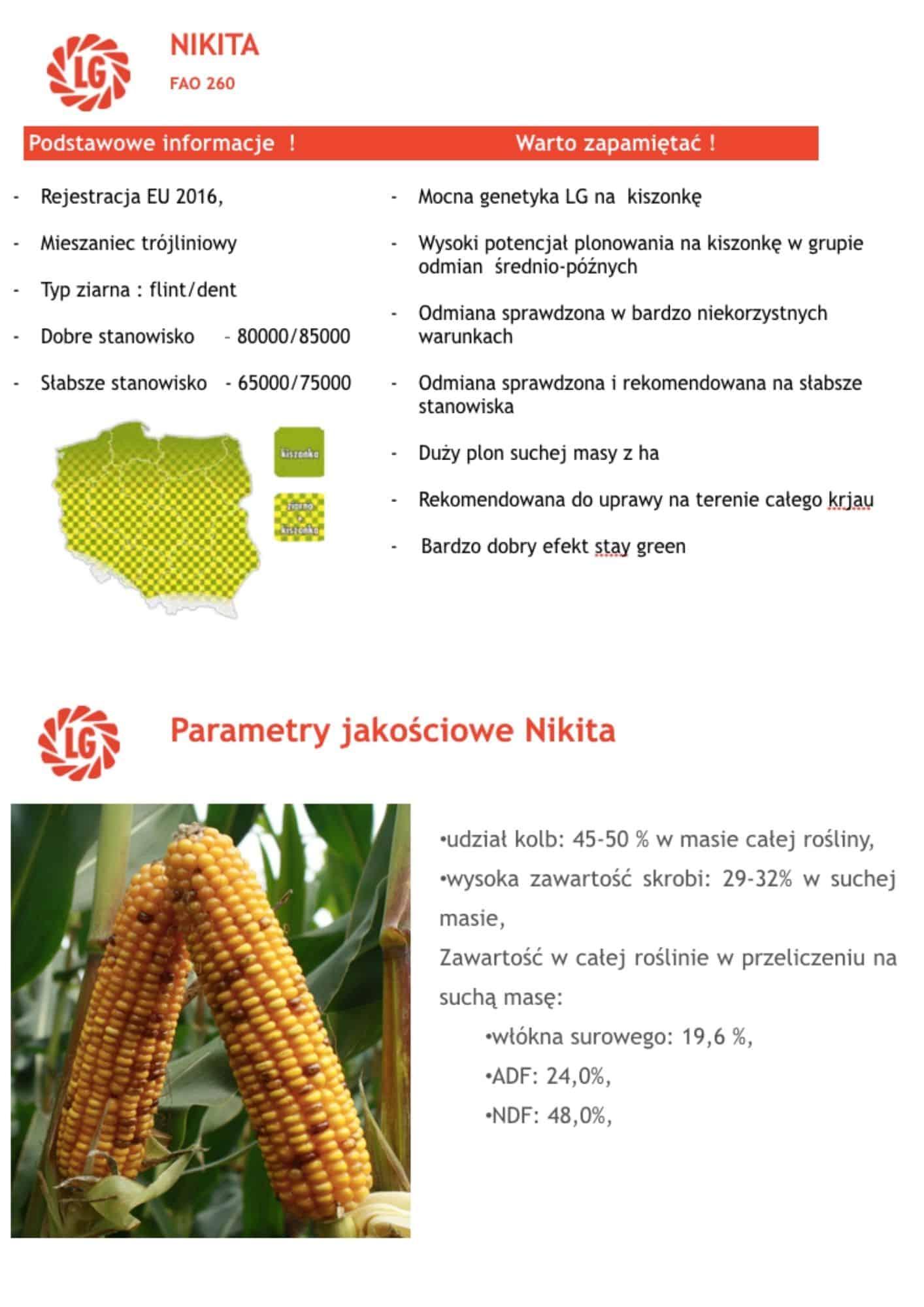 kukurydza LG Nikita